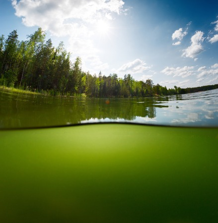 Split schot van de zoetwater vijver met bos boven het oppervlak en verblinding lege achtergrond onderwater Stockfoto