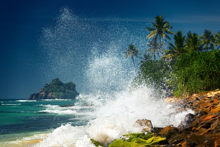 sea wave: Ocean wave breaking on rocky coast with palm trees. Sri Lanka