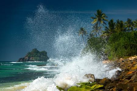 breaking wave: Ocean wave breaking on rocky coast with palm trees. Sri Lanka