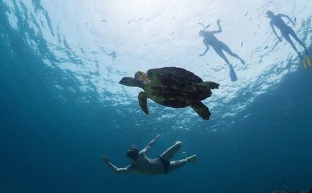 skin diving: Group of friends snorkeling with the turtle