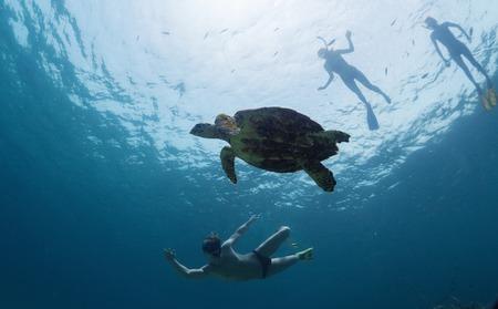 schildkröte: Gruppe Freunde, Schnorcheln mit der Schildkröten