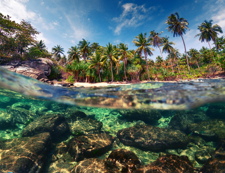 palm trees: Tropical beach with palm trees and rocks underwater