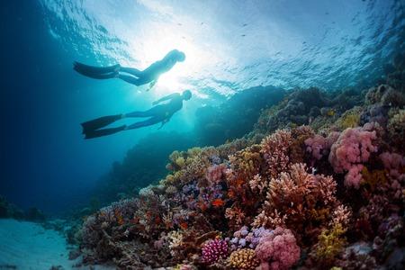 picada: Dos buceadores nadan bajo el agua sobre los arrecifes de coral vivo. Mar Rojo, Egipto Foto de archivo