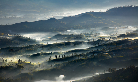Morning valley with tea plantations filled with fog in the highland area of Sri Lanka Фото со стока