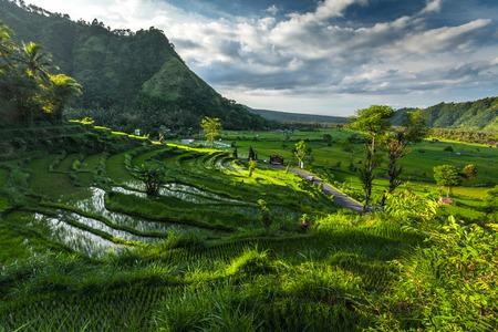 인도네시아 발리 섬의 논들