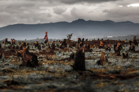slash: Stumps on the valley caused by deforestation and slash and burn type of agriculture of Madagascar