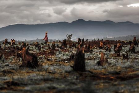 deforestacion: Tocones en el valle causadas por la deforestación y la tala y tipo de agricultura de Madagascar queman