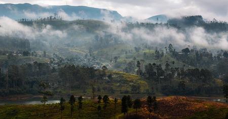 Fog over the mountains with tea plantations. Sri Lanka