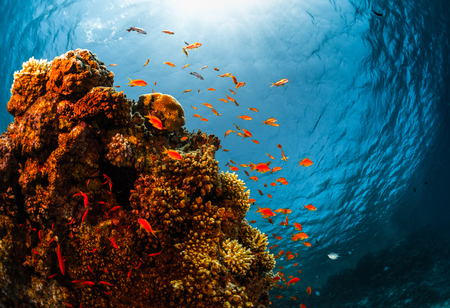 tiefe: Korallenriff mit Fisch unter Wasser