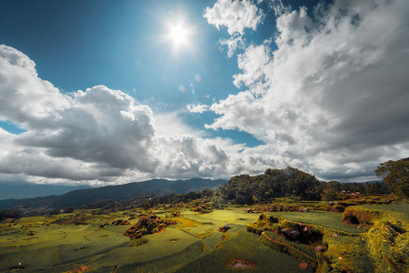 indonesia culture: Rice field in a mountains of the island of Sulawesi, Indonesia