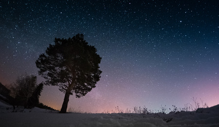cielo estrellado: cielo estrellado y el invierno bosque de pinos Foto de archivo