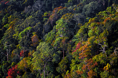 tropical forest: Tropical forest with colorful trees