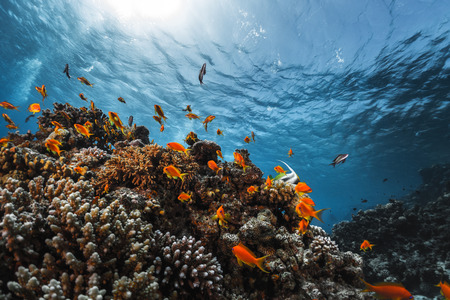 reef fish: Coral reef with fish underwater