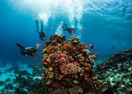 hanging around: Group of divers hanging around vivid coral reef formation. Red Sea, Egypt