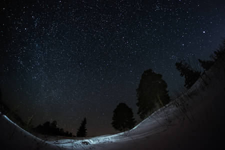 star sky: Starry sky and winter forest with pine trees