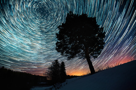 Star trails on a winter sky and pine tree in a snowy field