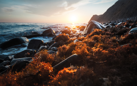 sea weed: Sunset over the sea rocky coast with red sea weed