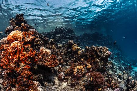 Koraalrif met vissen onderwater