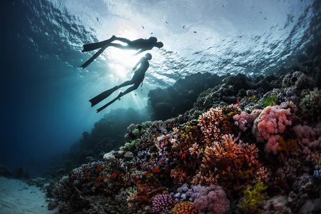 Dois freedivers nadam debaixo d'água ao longo do recife de coral vivo. Mar Vermelho, Egipto