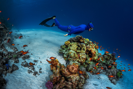 Free diver swimming underwater over vivid coral reef. Red Sea, Egypt 스톡 콘텐츠
