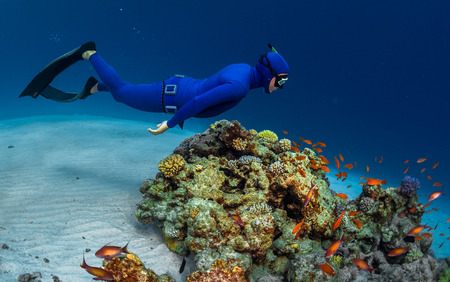 free diver: Free diver swimming underwater over vivid coral reef. Red Sea, Egypt Stock Photo