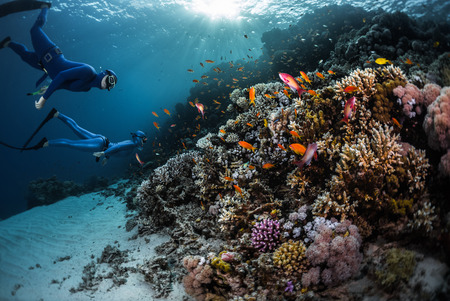 Two freedivers swimming underwater over vivid coral reef. Red Sea, Egypt Stock fotó - 54785102
