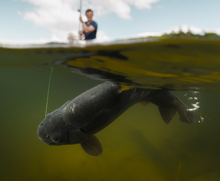 Split Schuss des Fischer mit Stange in das Boot und Unterwasser-Blick auf die großen Fische (Karpfen der Familie der Cyprinidae)