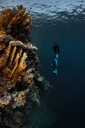 free diver: Lady free diver descending along the vivid coral reef wall in the tropical sea