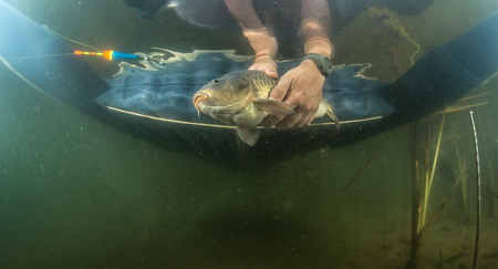 fish water: The underwater scenes. Hands of a fisherman holding a fish under water Stock Photo