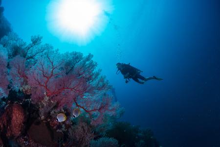 underwater ocean: Divers exploring the coral reef in a tropical sea