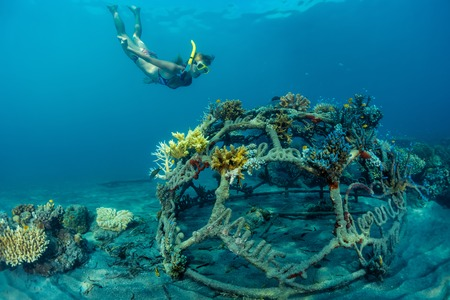 breath hold: Young lady snorkeling over metal structure with baby corals in the reef restoration area in Pemuteran village. Bali island