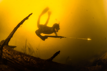 speargun: Underwater shot of the hunter with speargun in a lake with dirty yellow water