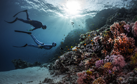 free diver: Two freedivers swimming underwater over vivid coral reef. Red Sea, Egypt