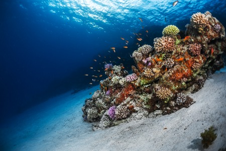 ocean water: Underwater shot of the sea floor and vivid coral reef. Red Sea, Egypt Stock Photo