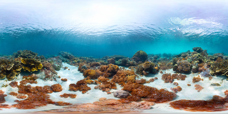 Spherical, 360 degrees, seamless panorama of the sea floor with corals Stock Photo