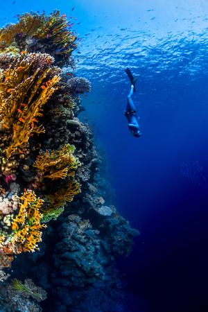Freediver descending along the vivid reef wall. Red Sea, Egypt