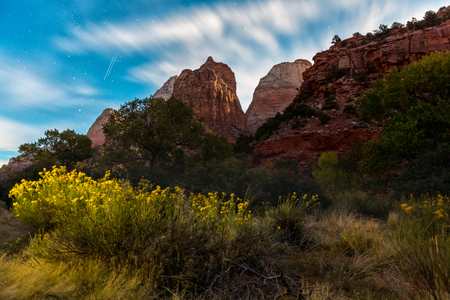 Zion National Park with plant on the foreground at sunset, USA Imagens - 72891841