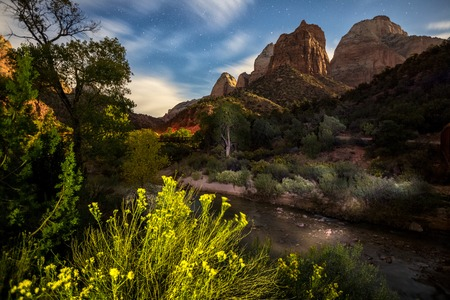Zion National Park with plant on the foreground at sunset, USA