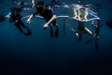 Free divers on the oceans surface preparing to descend to the depth