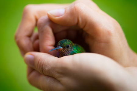 Little hummingbird sits in the hands. Extreme macro shot with shallow DOF and focus on the eye.