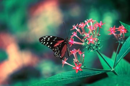 나비는 핑크색 꽃에 앉는다.