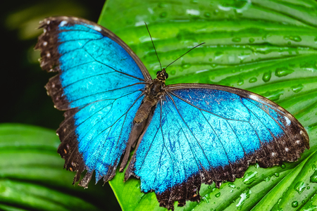 Blue butterfly sits on the green leaf Banco de Imagens