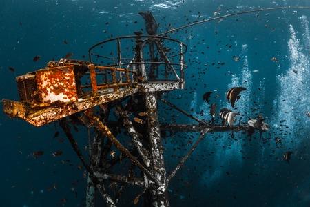 코 창, 태국의 섬 근처 선박 잔해의 수중 총