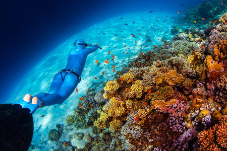 freediving: Woman freediver glides over vivid coral reef in a crystal clear tropical sea