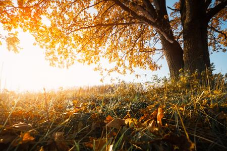 Albero di autunno sul prato secco al giorno soleggiato Archivio Fotografico - 83938102