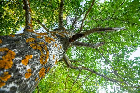 Albero verde di estate con la fine sulla vista del tronco Archivio Fotografico - 83938105