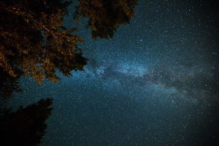 Starry sky, Milky Way galaxy and highlighted trees Stok Fotoğraf