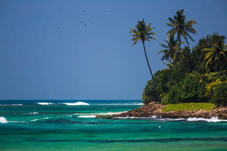 Palmiers sur la côte luxuriante verte et mer tropicale turquoise avec des vagues Banque d'images - 85261870