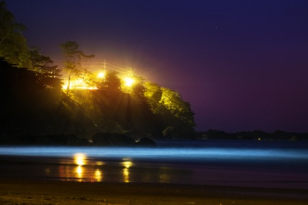 Night ocean and steep coast with highlighted trees