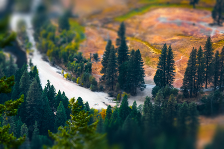 Pine trees on the coast of a dry river. Yosemity National Park, USA
